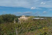 La vigne de Solan. Au fond, on devine le chaiset l'église en construction © Danièle Boone