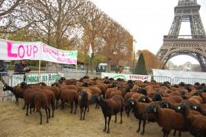 Manif d'éleveurs au Champ de Mars le 27 novembre 2014 @ Marc Giraud