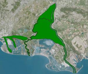 Vue du delta de Camargue, avec en vert la couverture forestière potentielle