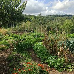 Fertilité et exhubérance des jardins © Sandrine Boucher