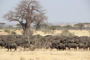 TANZANIE-MALAWI-ZAMBIE 2015 298