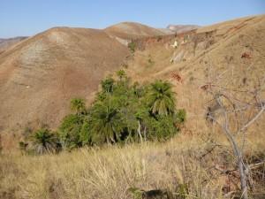refueg arbres hautes terres302(1)