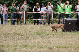 Lacher lynx 30-7-2016 066