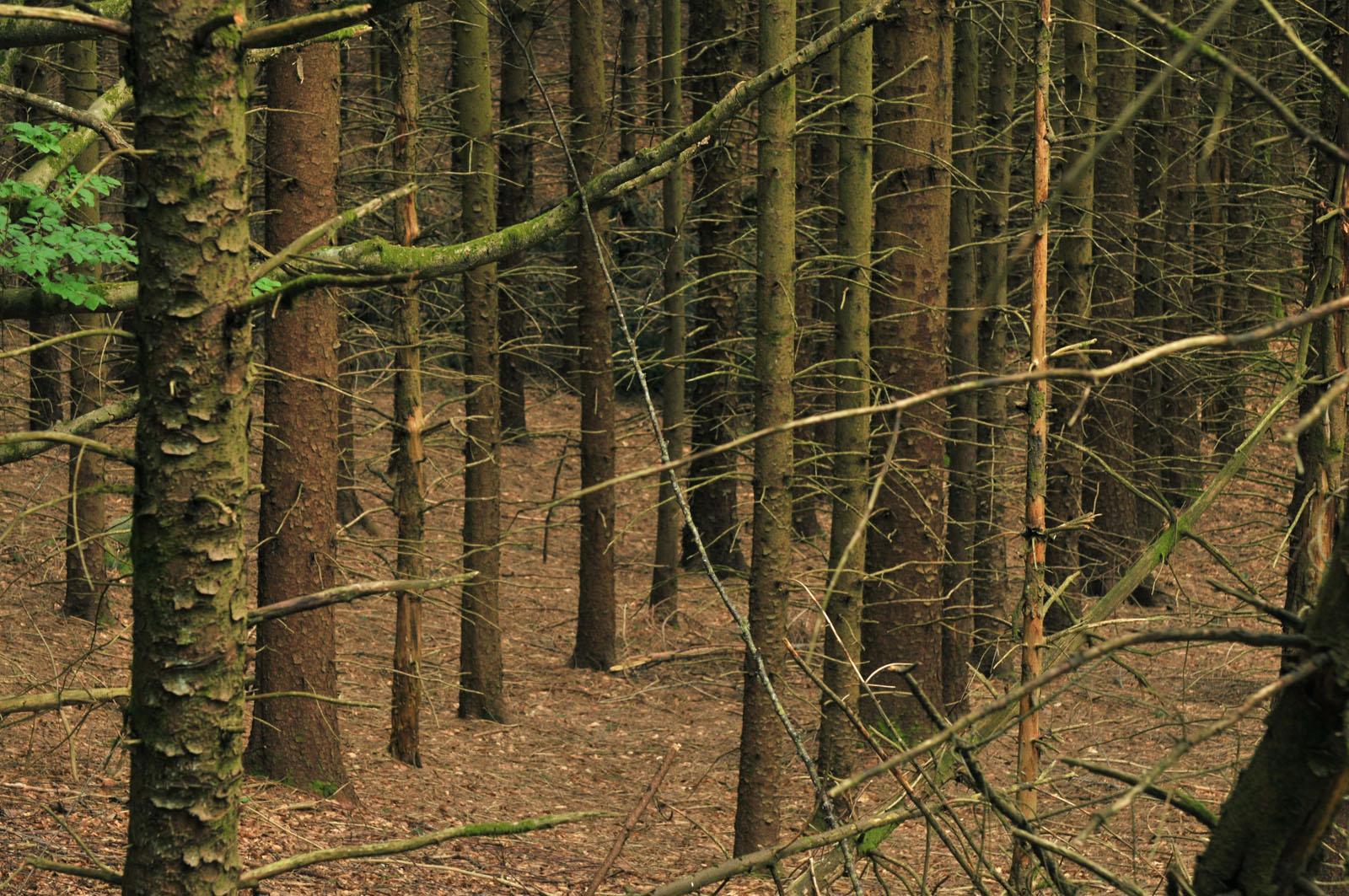 Une gr ve des forestiers par del tout salaire rappeler for Haute futaie